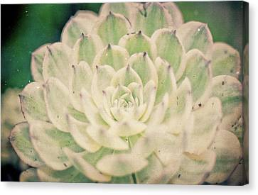 Canvas Print featuring the photograph Natural Geometry by Ana V Ramirez