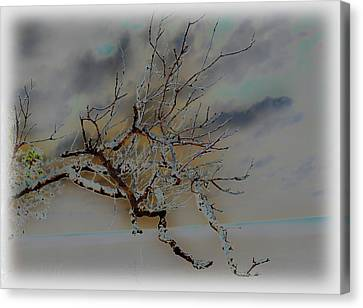 Natural Inversion -1 Canvas Print by Amanda Vouglas