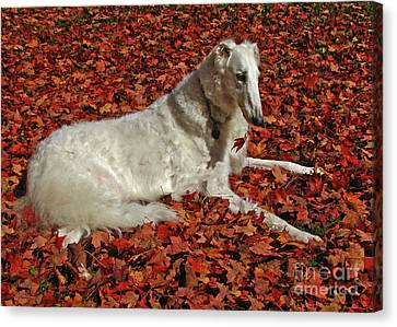 Natural Red And White Canvas Print
