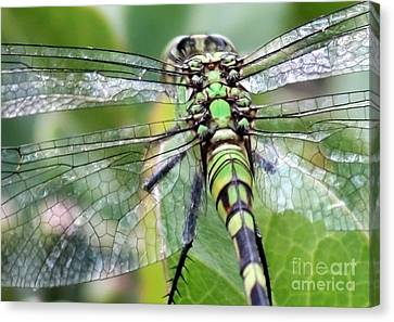 Natural Stained Glass Canvas Print by Carol Groenen