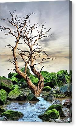 Canvas Print featuring the photograph Natural Surroundings by Angel Jesus De la Fuente