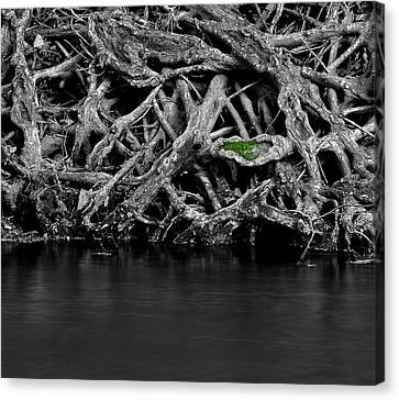 Natural Weaves Canvas Print by Mark Fuller