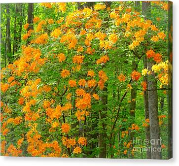Canvas Print featuring the photograph Natural Wild Azaleas  by Rand Herron