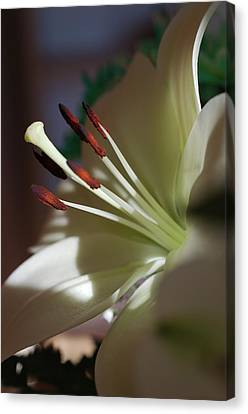 Naturally Elegant Canvas Print