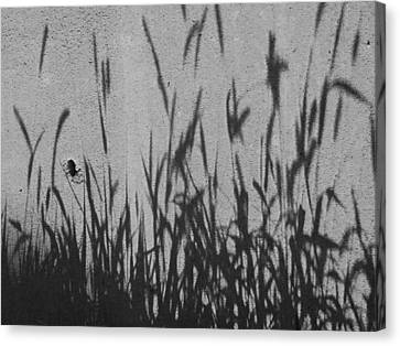 Canvas Print featuring the photograph Nature As Shadow by Lenore Senior