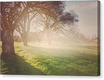 Flickering Light Canvas Print - Nature Background With Vintage Style Background by Brandon Bourdages