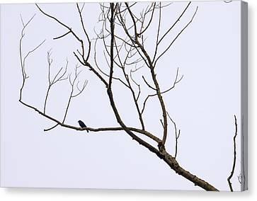 Nature - Bird On Branch 1 Canvas Print