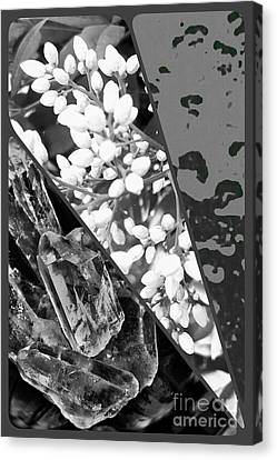 Nature Collage In Black And White Canvas Print