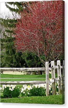 Granger Of Spring Life Canvas Print - Nature Comes A Live by Debra     Vatalaro