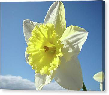 Nature Daffodil Flowers Art Prints Spring Nature Art Canvas Print by Baslee Troutman