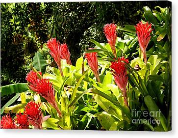 Canvas Print featuring the photograph Nature Exotic by The Art of Alice Terrill