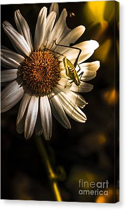 Nature Fine Art Summer Flower With Insect Canvas Print by Jorgo Photography - Wall Art Gallery