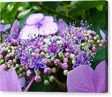 Nature Floral Art Prints Purple Hydrangea Flowers Baslee Troutman Canvas Print by Baslee Troutman