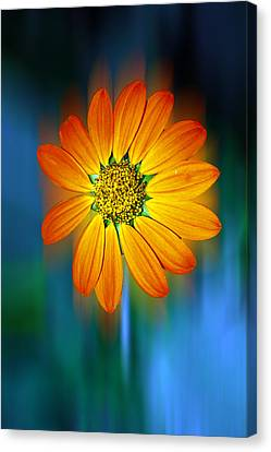 Nature In Motion Canvas Print by Wendy Mogul