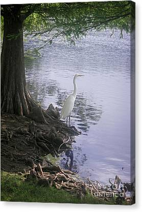 Nature In The Wild - Musings By A Lake Canvas Print by Lucyna A M Green