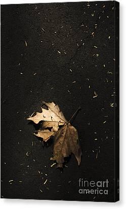 Nature Maple Leaf Fine Art Photo. Fall Of Autumn Canvas Print