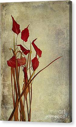 Nature Morte Du Moment Canvas Print