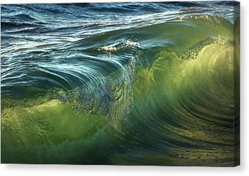 Canvas Print featuring the photograph Nature Never Ceases To Amaze by Peter Thoeny