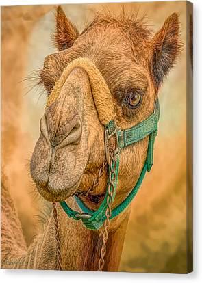 Nature Wear Camel Canvas Print by LeeAnn McLaneGoetz McLaneGoetzStudioLLCcom