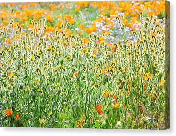 Canvas Print featuring the photograph Nature's Artwork - California Wildflowers by Ram Vasudev