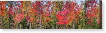 Canvas Print featuring the photograph Natures Autumn Palette by David Patterson