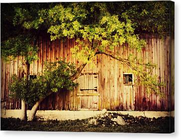 Natures Awning Canvas Print by Julie Hamilton