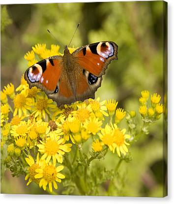Canvas Print featuring the photograph Nature's Beauty by Ian Middleton