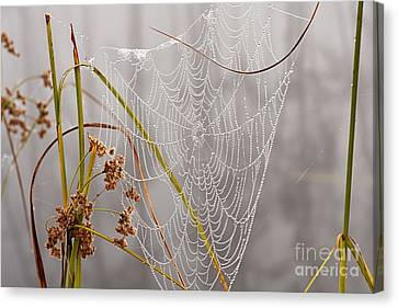 Natures Bling Canvas Print by Larry Ricker
