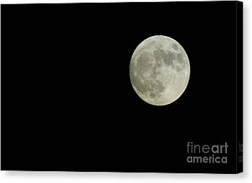 Natures Calendar Canvas Print by Chandra Nyleen