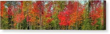 Canvas Print featuring the photograph Natures Fall Palette by David Patterson
