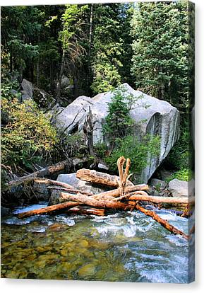 Water Filter Canvas Print - Nature's Filters by Kristin Elmquist