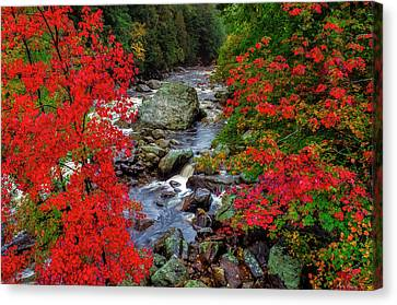 Natures Frame Canvas Print by Mark Papke