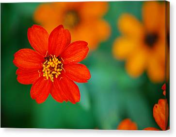 Canvas Print featuring the photograph Nature's Glow by Debbie Karnes