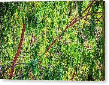 Canvas Print featuring the photograph Natures Greens, Yanchep National Park by Dave Catley