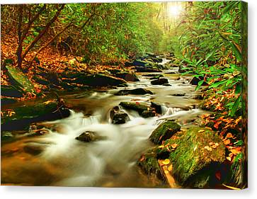 Natures Journey Canvas Print by Darren Fisher