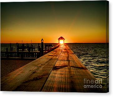 Nature's Lantern Canvas Print by Mark Miller