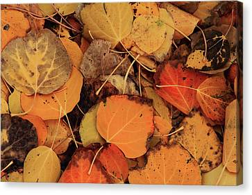 Nature Creates A Leaf Quilt Canvas Print