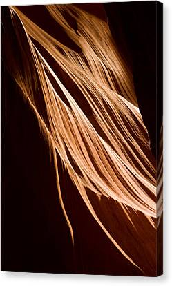 Natures Lines Canvas Print by Adam Romanowicz