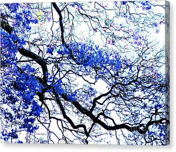 Natures Lines Canvas Print