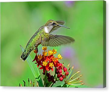 Canvas Print featuring the photograph Nature's Majesty by Rodney Campbell