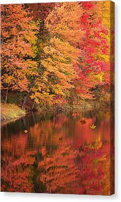 Natures Peace Canvas Print