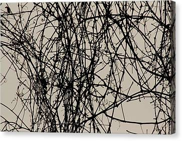 Nature's Pen And Ink 2 Canvas Print by Susie DeZarn