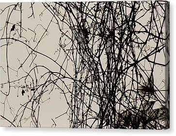 Nature's Pen And Ink Canvas Print by Susie DeZarn