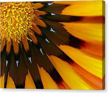 Nature's Pinwheel Canvas Print by Marion Cullen