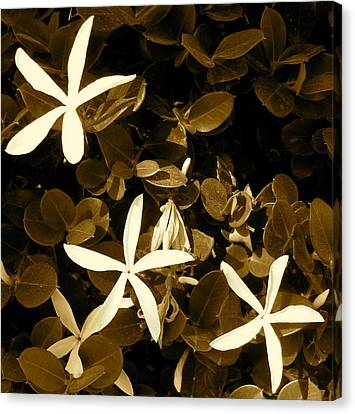 Nature's Stars Canvas Print by Ashley Butler