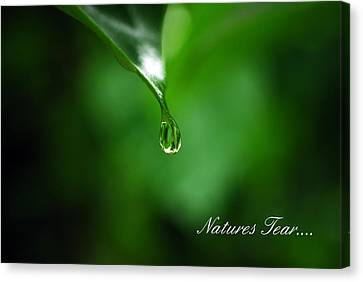 Natures Tear Canvas Print