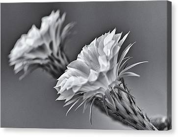 Nature's Trumpets Canvas Print