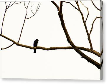 Nature - Bird On A Tree Branch 2 Canvas Print
