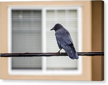 Nature - Crow On Wire Canvas Print