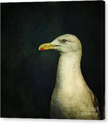White Birds Canvas Print - Naujaq by Priska Wettstein